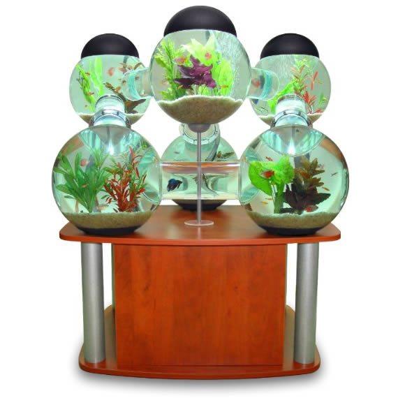 Fotografía de un acuario conformado por seis esferas comunicadas por canales que permiten a los peces ingresar en cada uno de los habitáculos, todo sobre una mesa de madera color cereza.