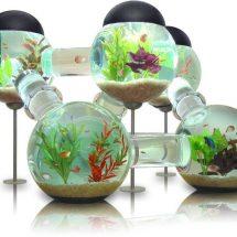 Fotografía de un acuario conformado por seis esferas comunicadas por canales que permiten a los peces ingresar en cada uno de los habitáculos, sin mesa.