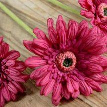 Tres margaritas color rosa oscuro con centro negro